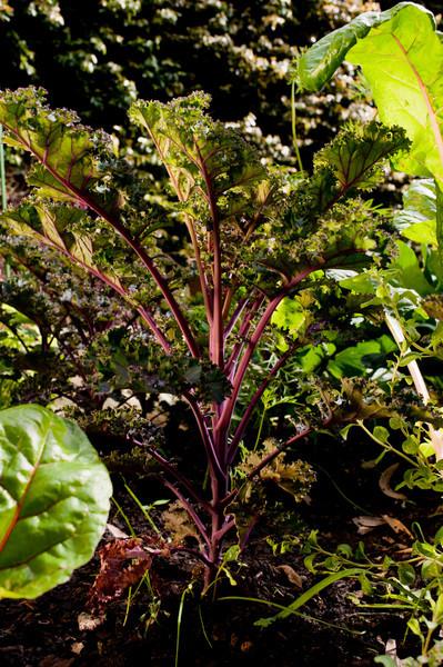 Julie's Garden-6300.jpg