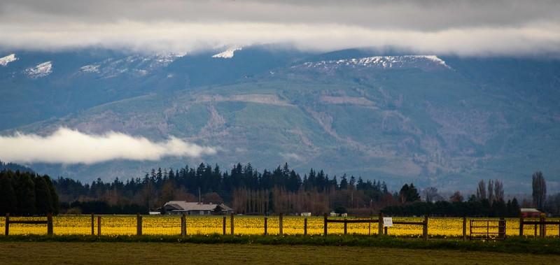 Fields abloom beneath heavy grey skies
