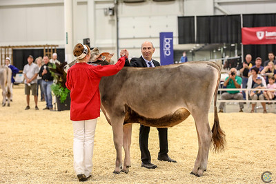Supreme Brown Swiss
