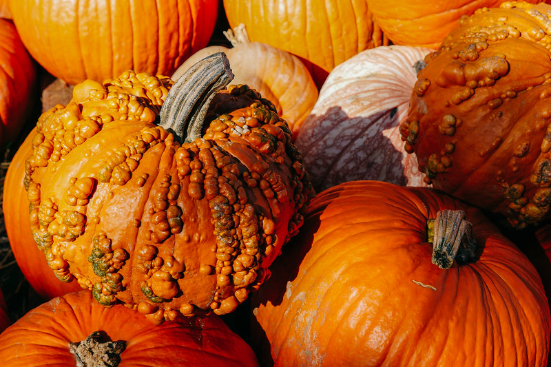assorted pumpkins 2 (1 of 1).jpg