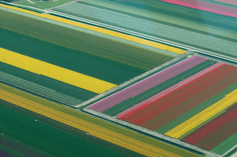 Tulip Overflight