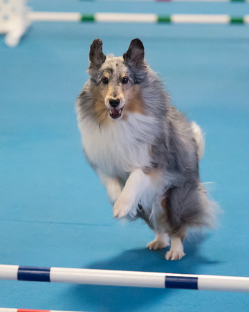 Agility Games Day - Sunday, March 1, 2015