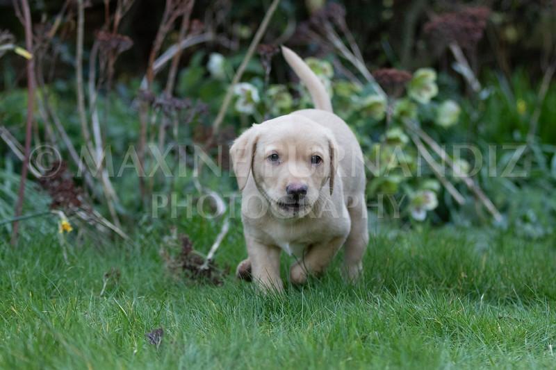 Weika Puppies 24 March 2019-6340.jpg