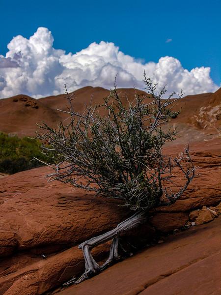 DSCN3073 Desert Plant +Clouds+++++.jpg