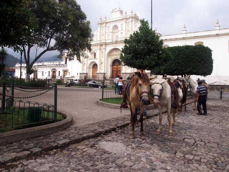 P7010515-horses.JPG
