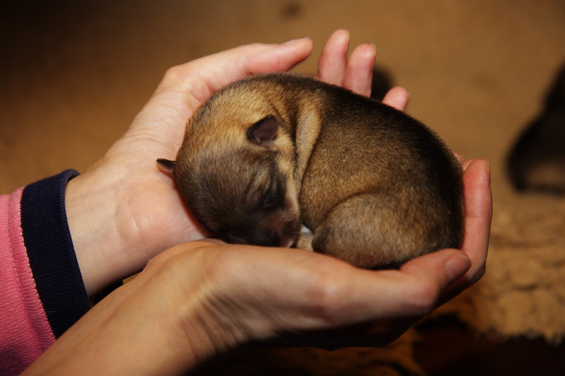 Images from folder Ronja pups