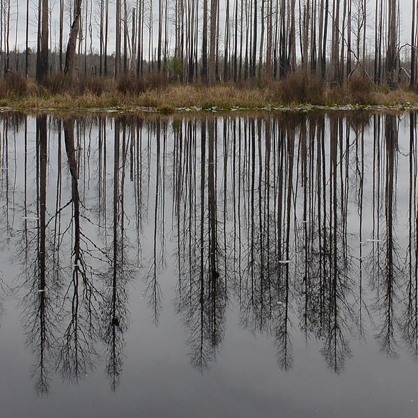 reflectio4.jpg