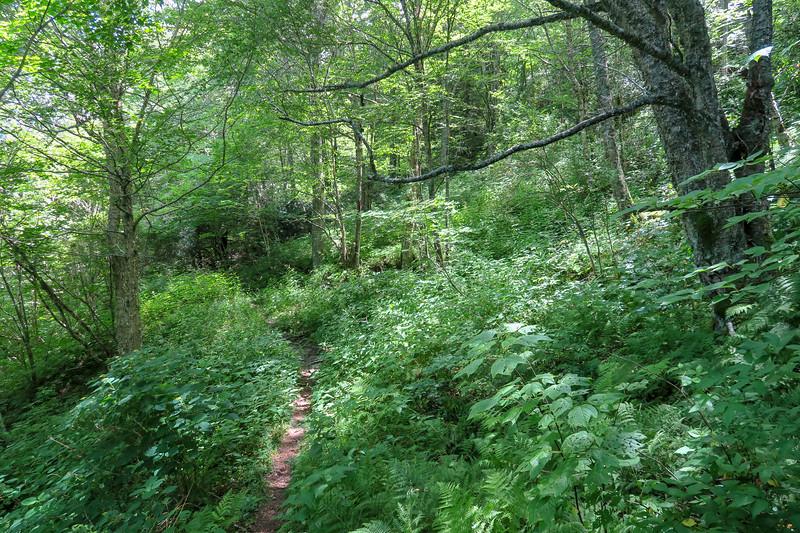 Buckeye Gap Trail -- 5,310'
