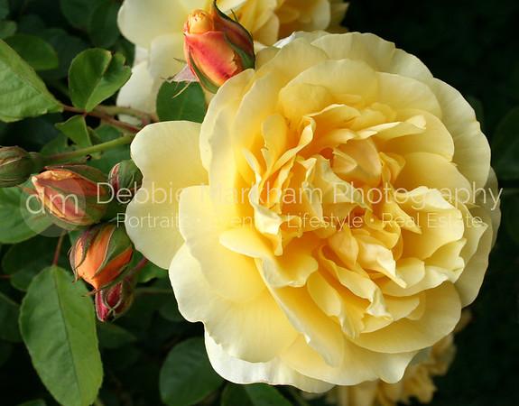 Floral Photography  |  San Luis Obispo  -  Cambria  Photographer