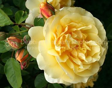 Floral Photography     San Luis Obispo  -  Cambria  Photographer