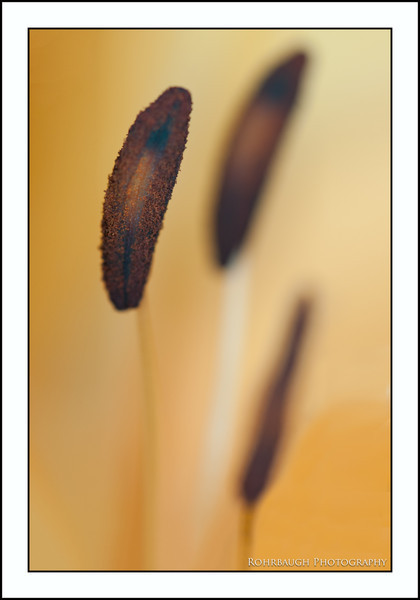 Rohrbaugh Photography Flowers 58.jpg