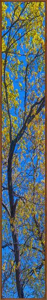 200x1266 oaks .jpg