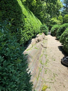 Yew Hedge Project