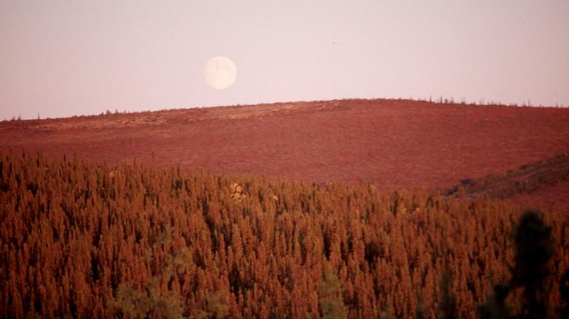 Artic Full Moon.jpg
