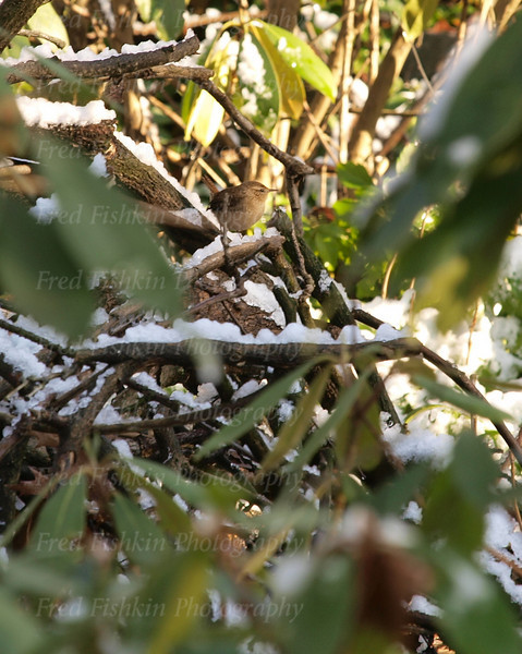 winter bird.jpg