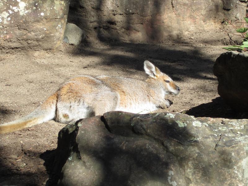 Sydney - Sydeny Zoo-56.JPG