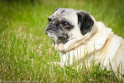 Arnold Pups