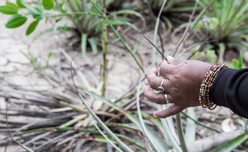 Para fabricar los hilados utilizan una plata llamada chaguar. /// Yarns are manufactered from a plant called chaguar.