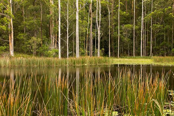Mid North Coast NSW