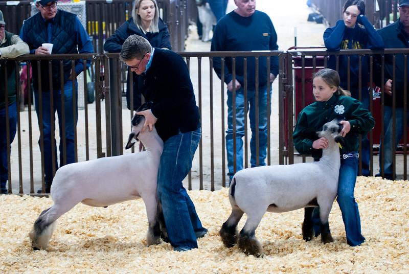 kay_county_showdown_sheep_20191207-80.jpg