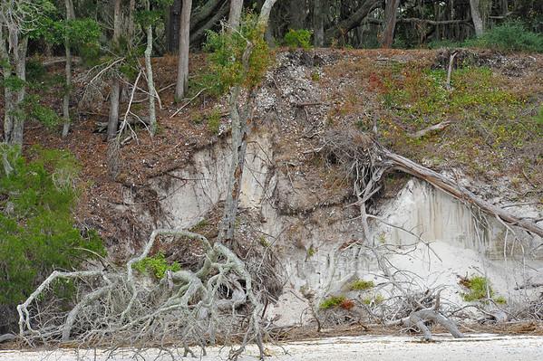Terrapin Point - Cumberland Island - Documented 11-29-10