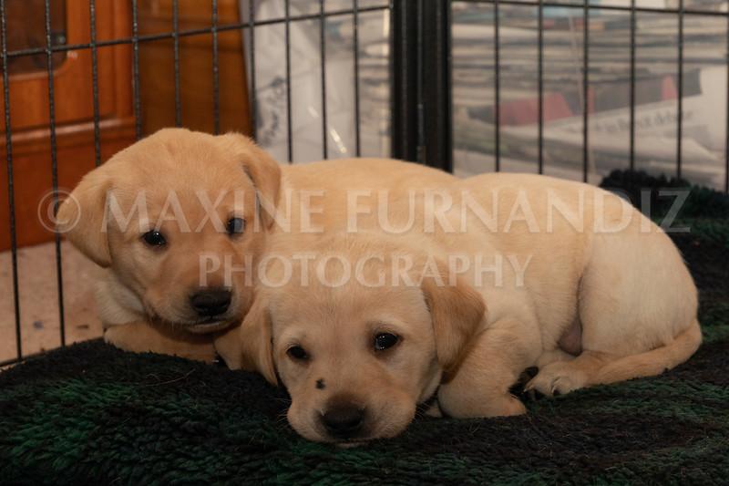 Weika Puppies 2 Mar 2019-8502.jpg