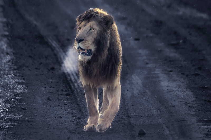 Lion's breath