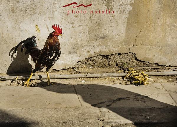 Animales en Cuba