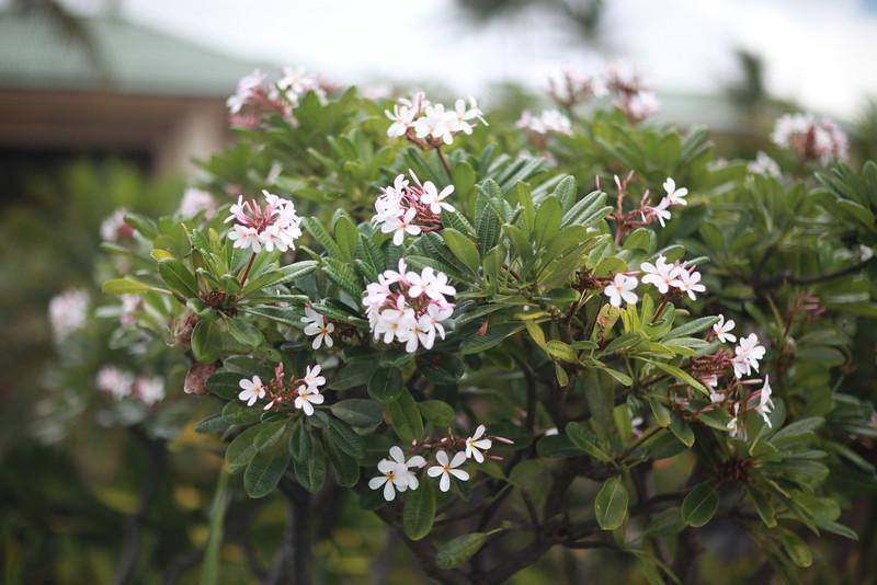 Kauai_D4_AM 060.jpg