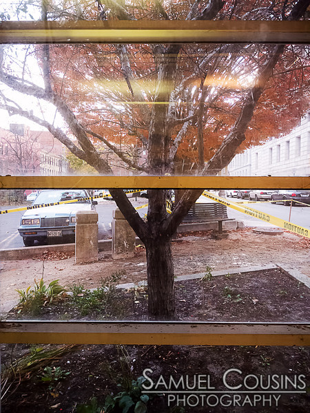 Looking out an elevator window at a tree.