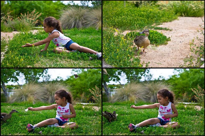 DuckStory.jpg