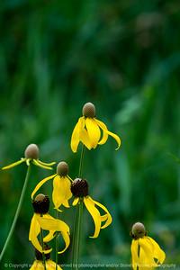 015-flower-wdsm-20jul18-08x12-007-500-6082