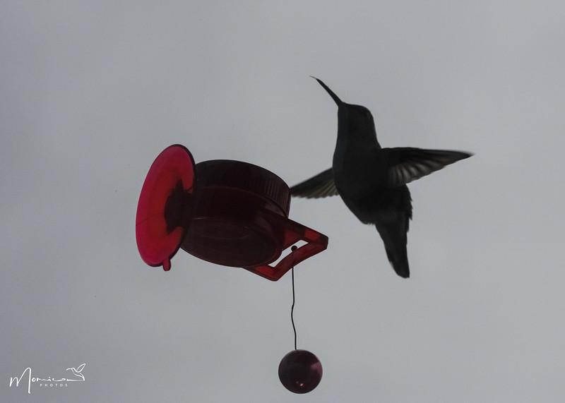 2021 - The Hummingbird Chronicles-0822_edit.jpg