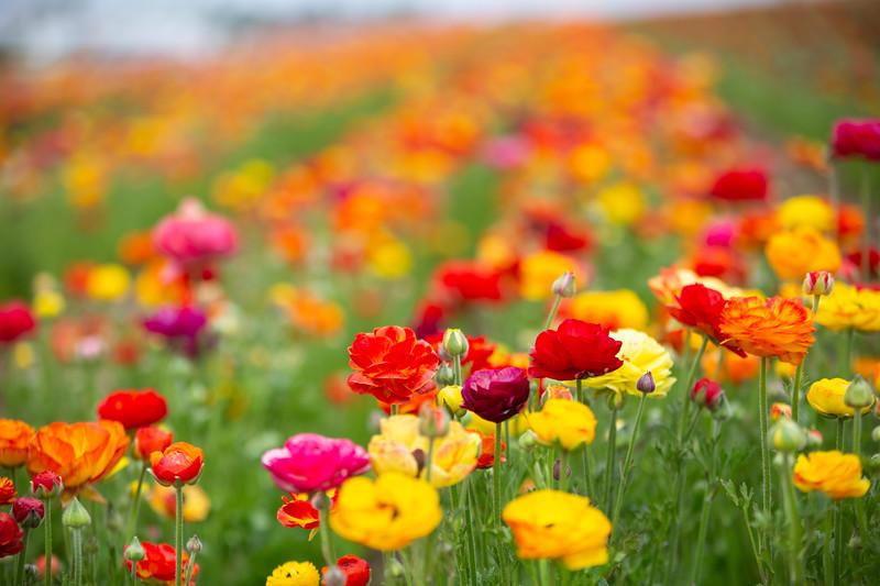 Spring Flowers B-283.jpg
