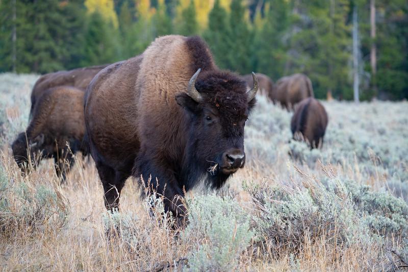 Yellowstone-88.jpg
