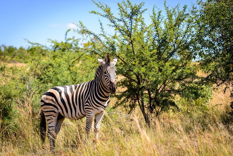 Pilanesberg-20130217-0067