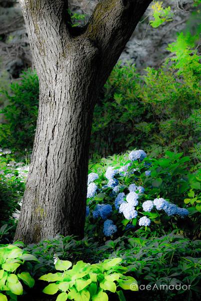 Cylburn Arboretum-aeamador-0146.jpg