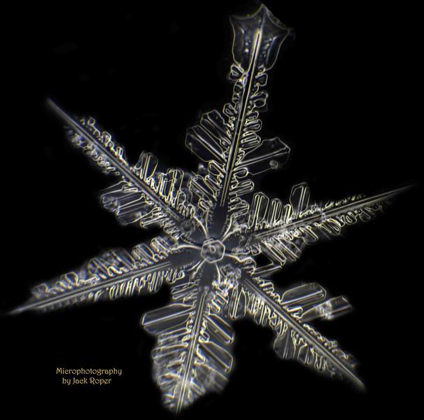 02 Snow Flake unique  INVERTED -1-29-2018.jpg