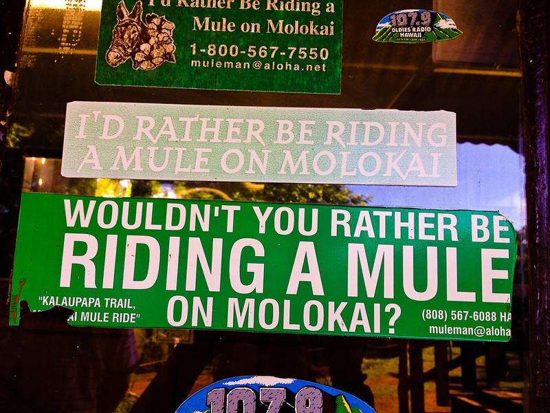 mule would you.jpg