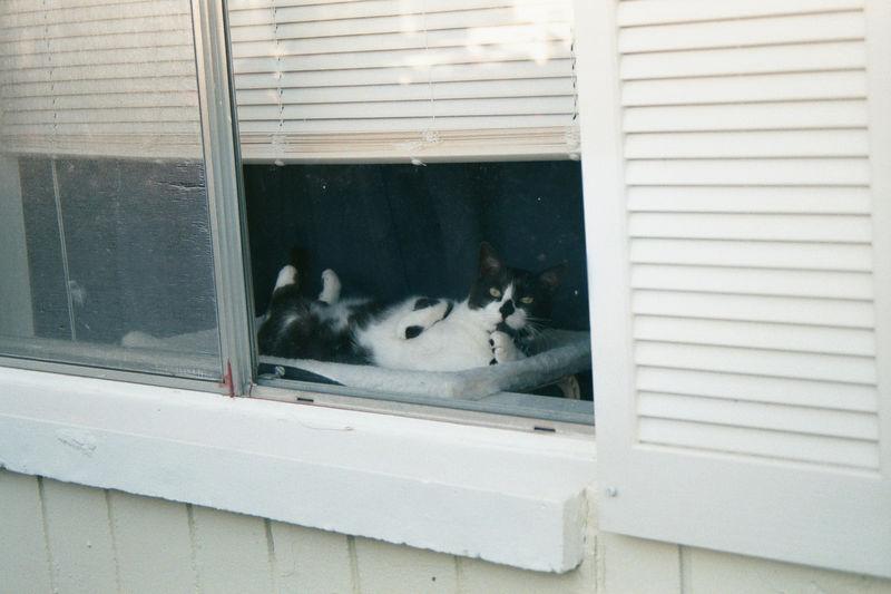 2001 08b - Cats at old apt 32.JPG