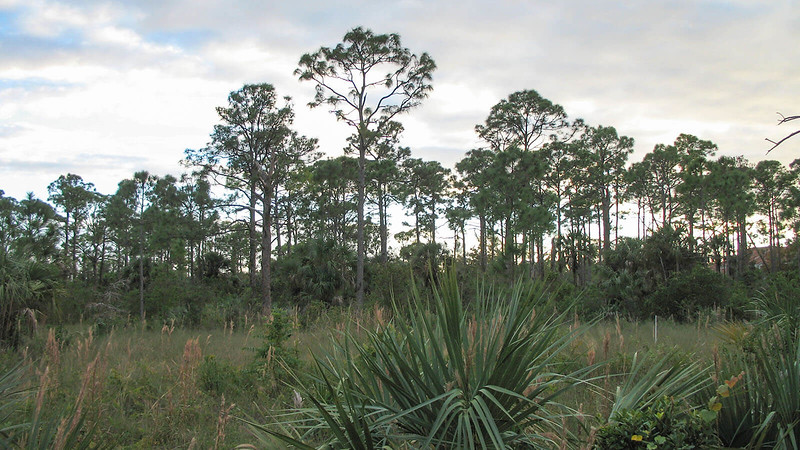 Hillsboro Pineland Natural Area