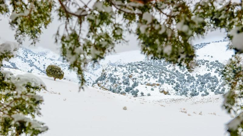 Weston Resevoir Snow Shoeisng-23.jpg