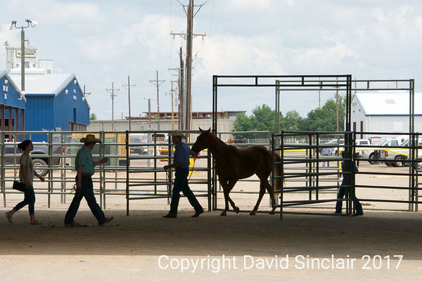 High Plains Ranchers and Breeders Association Futurity