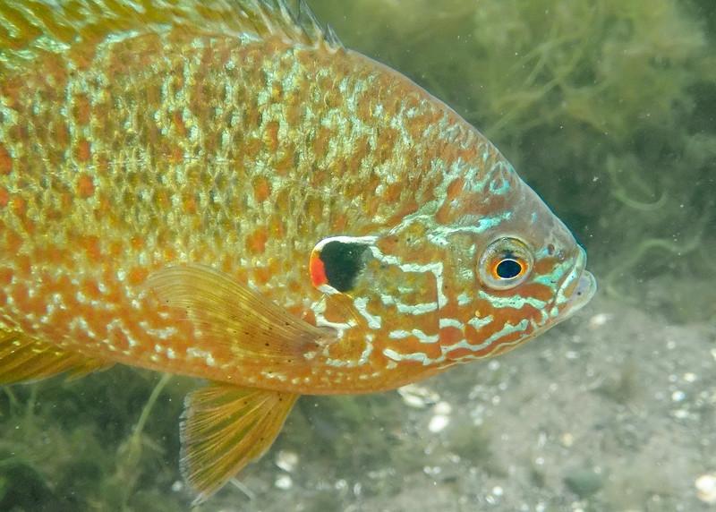 sunfish12 (1 of 1).jpg