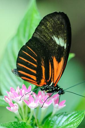 20060220 Denver Butterfly Museum