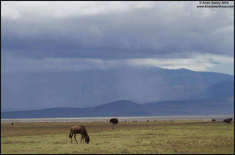 Wildebeest scape, Ngorongoro Crater, Ngorongoro Conservation Area, Tanzania, November 2019