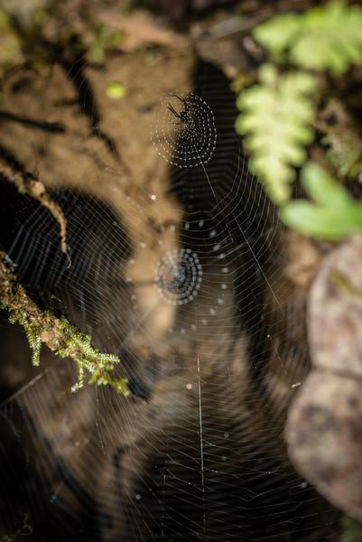 SPIDER - fab web-1339.jpg