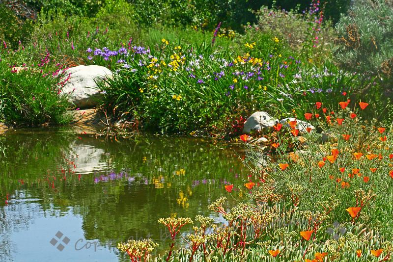 The Wildflower Pond.jpg