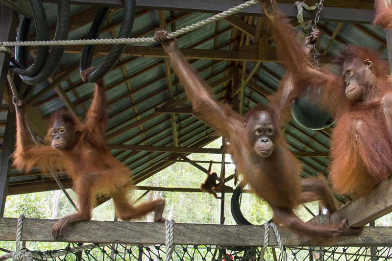 Borneo-2240.jpg