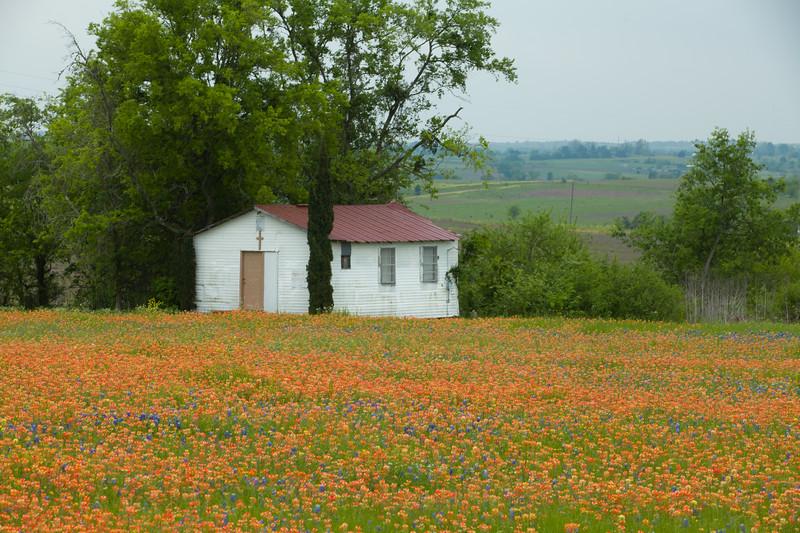 2015_4_3 Texas Wildflowers-7690.jpg